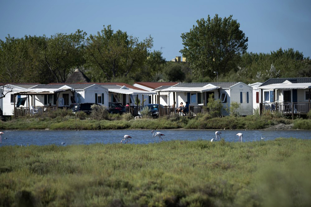 Mobil-home au milieu des flamants roses